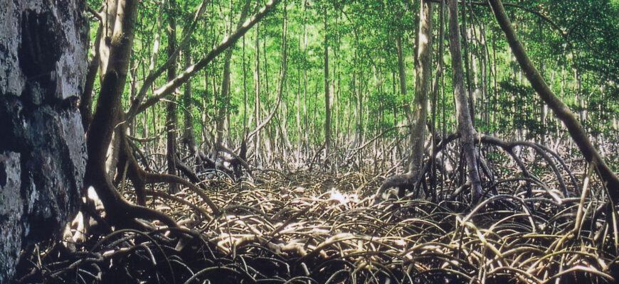 mangri-gaiti