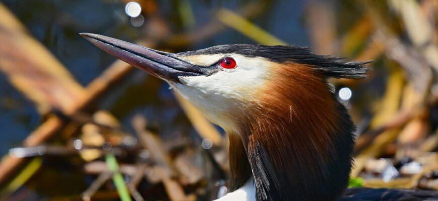 ptica-poganka