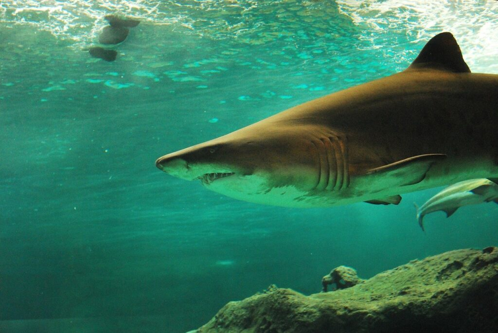 shark-506025_1280