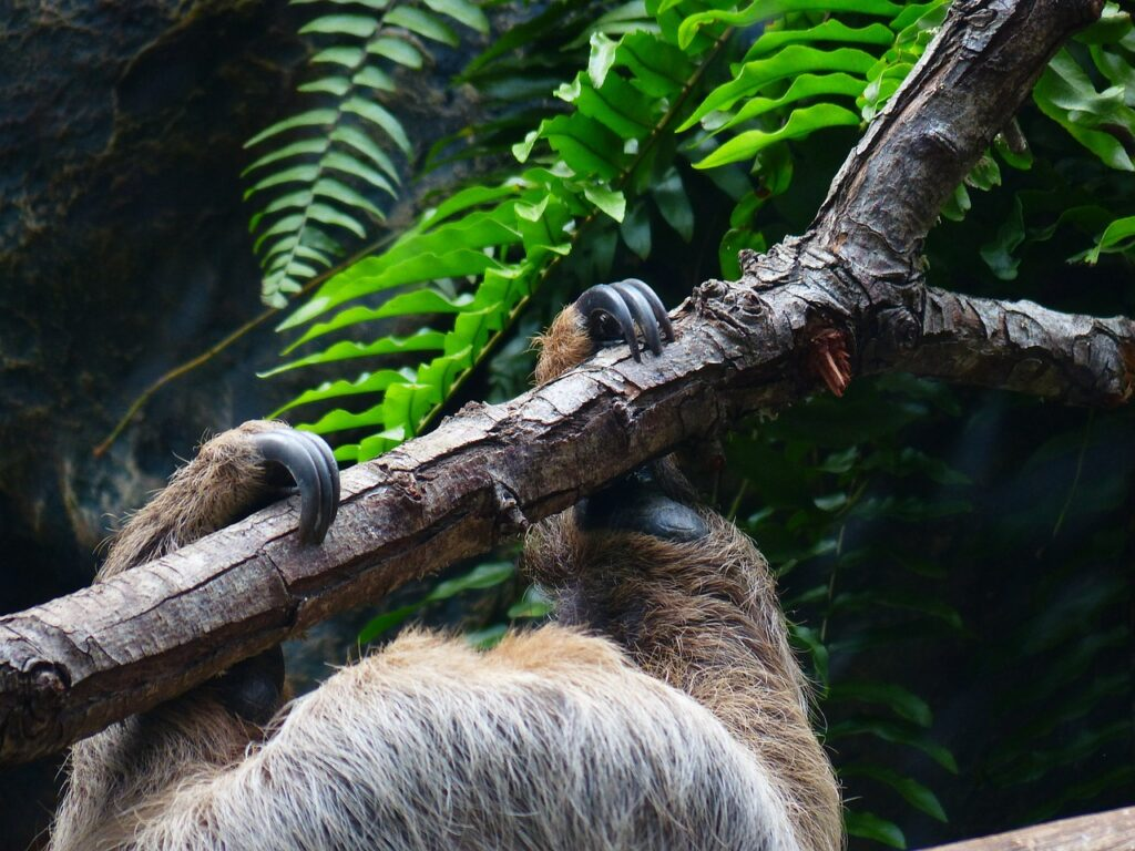 sloth-407090_1280
